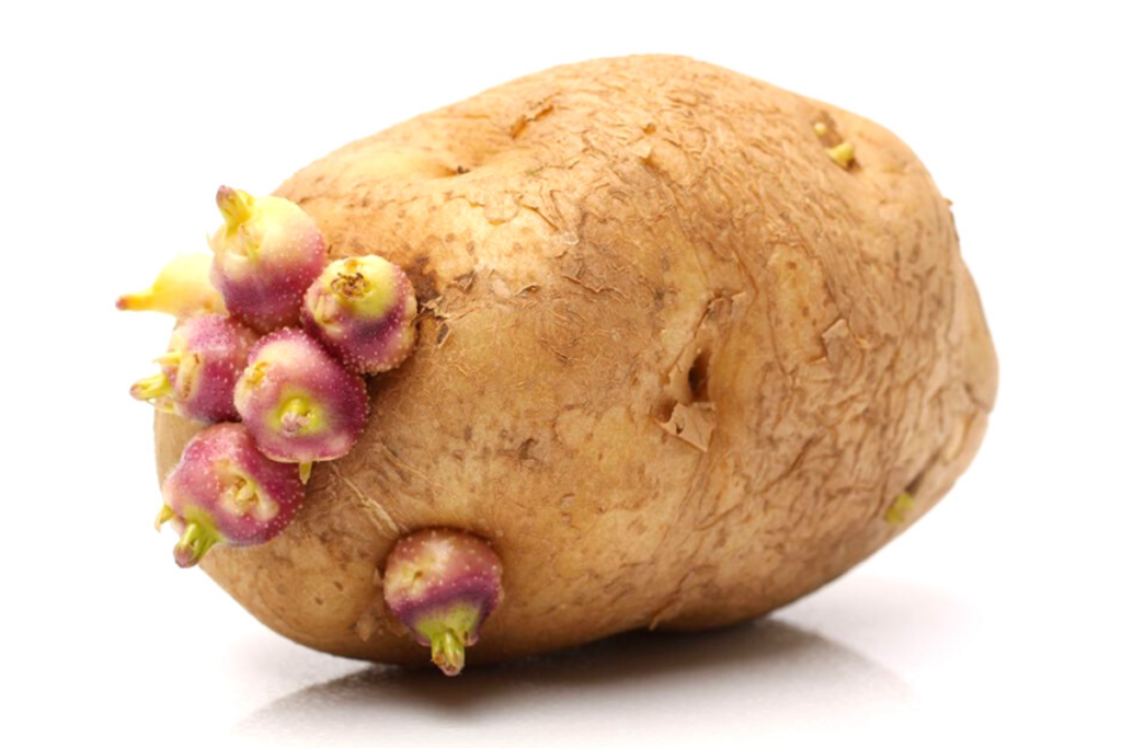 this is a picture of a potato, potato is a vegetable you can do a baked potato in the air fryer , oven-roasted potatoes, roasted potatoes,homemade mashed potatoes ina Garten, mashed potatoes